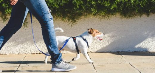 How Walking Can Lead To Better Health